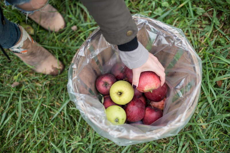 organic-pick-your-own-apples-near-philadelphia