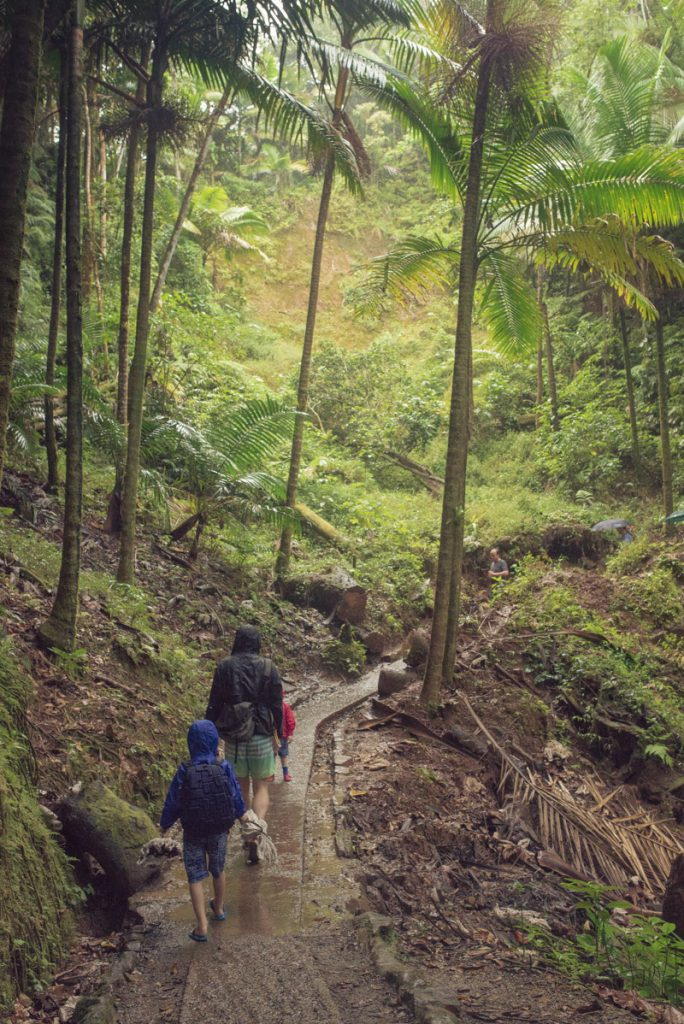 yunque-hiking-in-the-rain